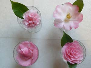 Camellias are starting to bloom.