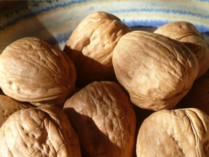 subject_walnuts