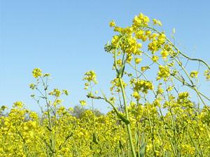 subject5_mustard_3