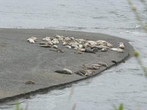 subject18_beaches_seals