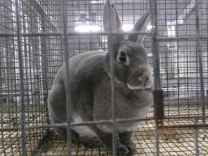subject19_Fair_bunny5