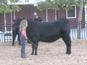 subject19_Fair_livestock1