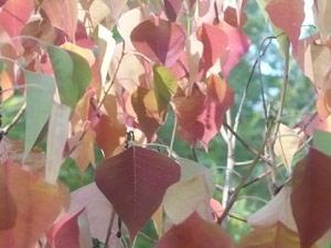 subject25_fallcolor_chinese mandarin02