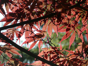 subject25_fallcolor_japmap0