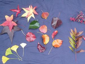 subject25_fallcolor_leaf2