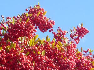 sub26_berries07