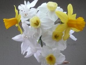 Y2sub28_March_acacia_2_bulb