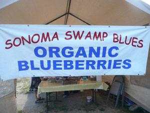 subject21_blueberries01