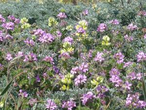 Y2sub31_saltpoint_flowers4