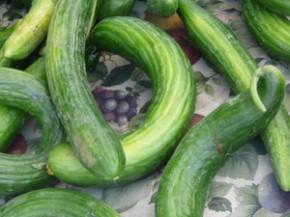 Y2sub32_Cucumber03