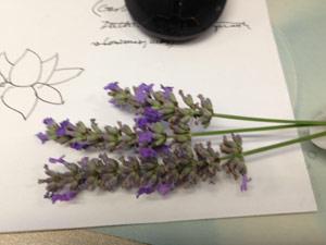 Y2sub32_Lavender07