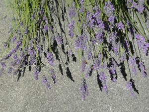 Y2sub32_Lavender10
