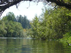 Y2sub32_River15